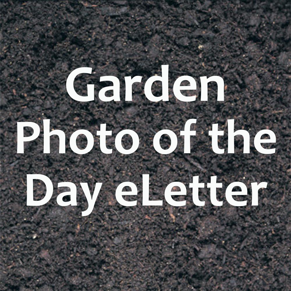 Fine Gardening Media Kit Garden Photo Of The Day Eletter Fine